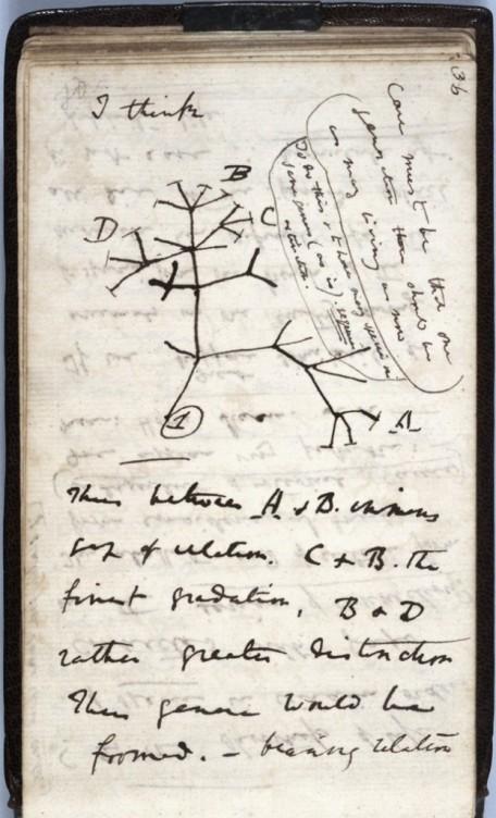 Caderno-de-anotações_primeiro-diagrama-de-uma-árvore-evolutiva_edit-622x1024