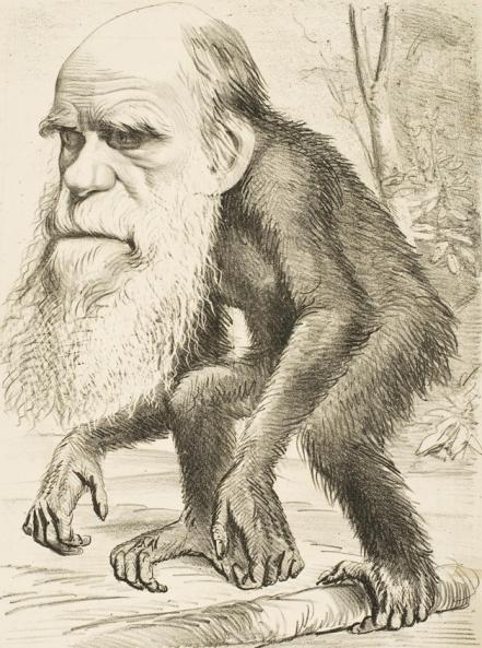 darwin-ape_edit